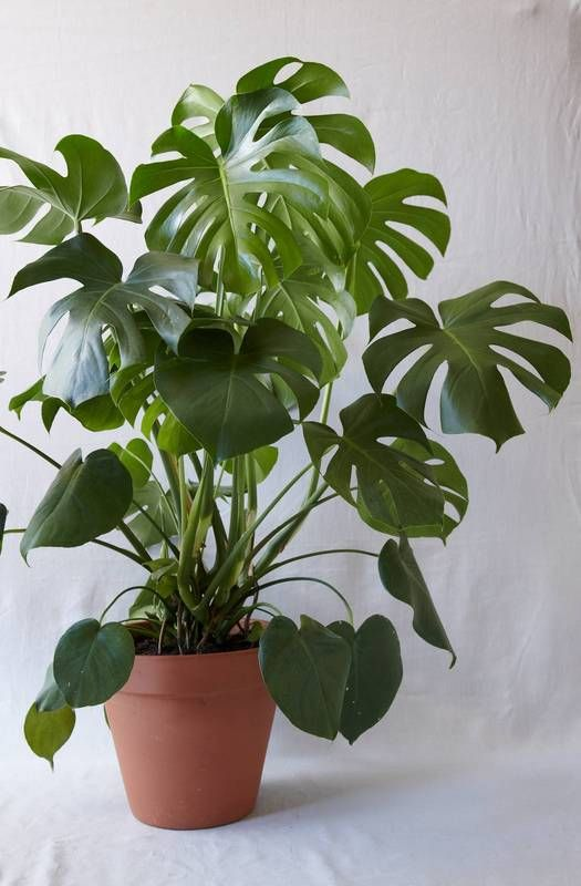 Top 4 - Low Maintenance Indoor Plants