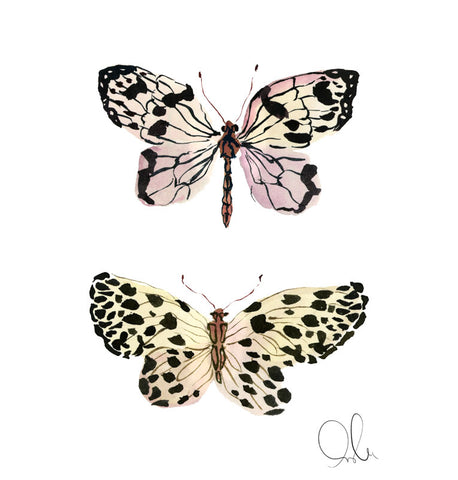 Botanical Print: Butterfly III