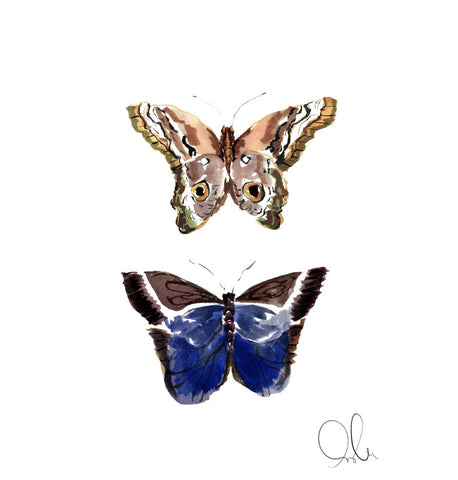 Botanical Print: Butterfly IV
