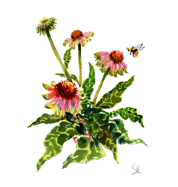 Botanical Print: Cone Flower