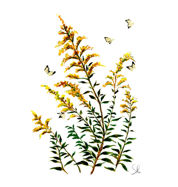 Botanical Print: Goldenrod No. 2