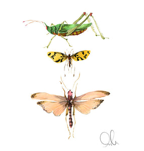 Botanical Print: Insect