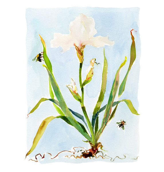 Large Botanical Print: White Iris on Blue No. 1
