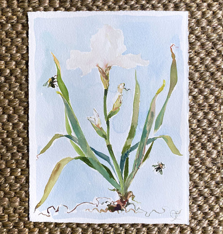 White Iris on Blue No. 1
