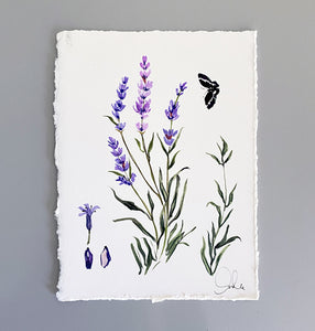 Botanical Original: Lavender