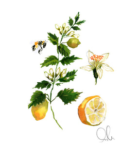 Botanical Print: Lemon