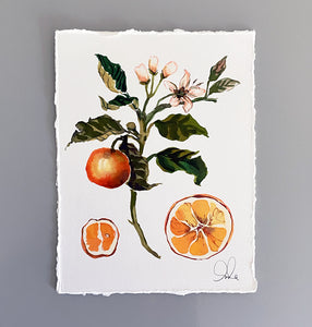 Botanical Original: Orange Blossom