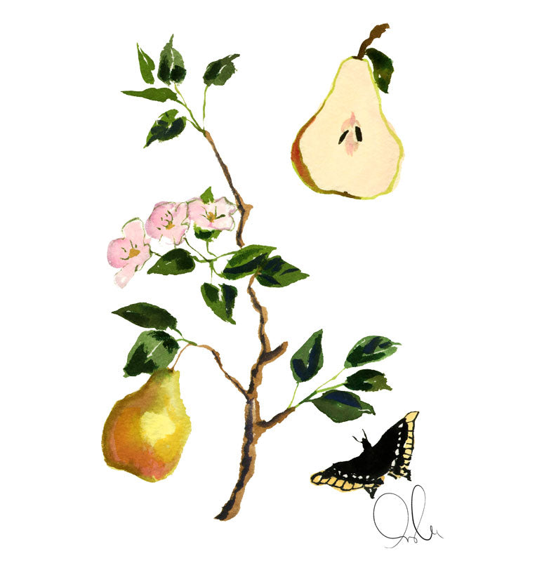 Botanical Print: Pear