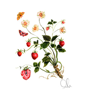 Botanical Print: Strawberry