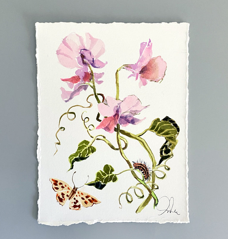 Botanical Original: Sweet Pea