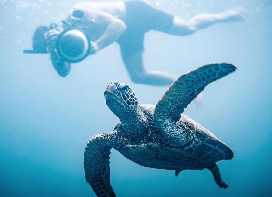 Turtle in the Sea filmed by a diver