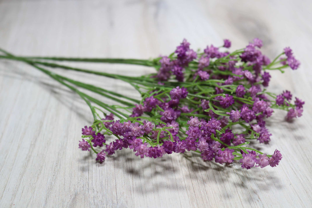 Baby's Breath - Lavender