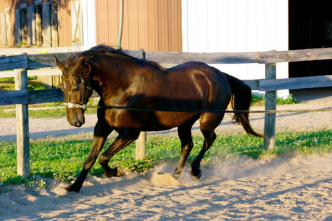 Reduce Anxiety and Fear in Your Horse's Daily Life