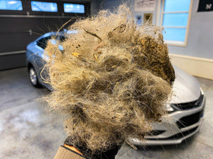 the most pet hair removed from a car in a deatail geek auto shop