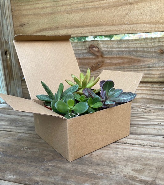 Plant Club - Monthly Subscription Box
