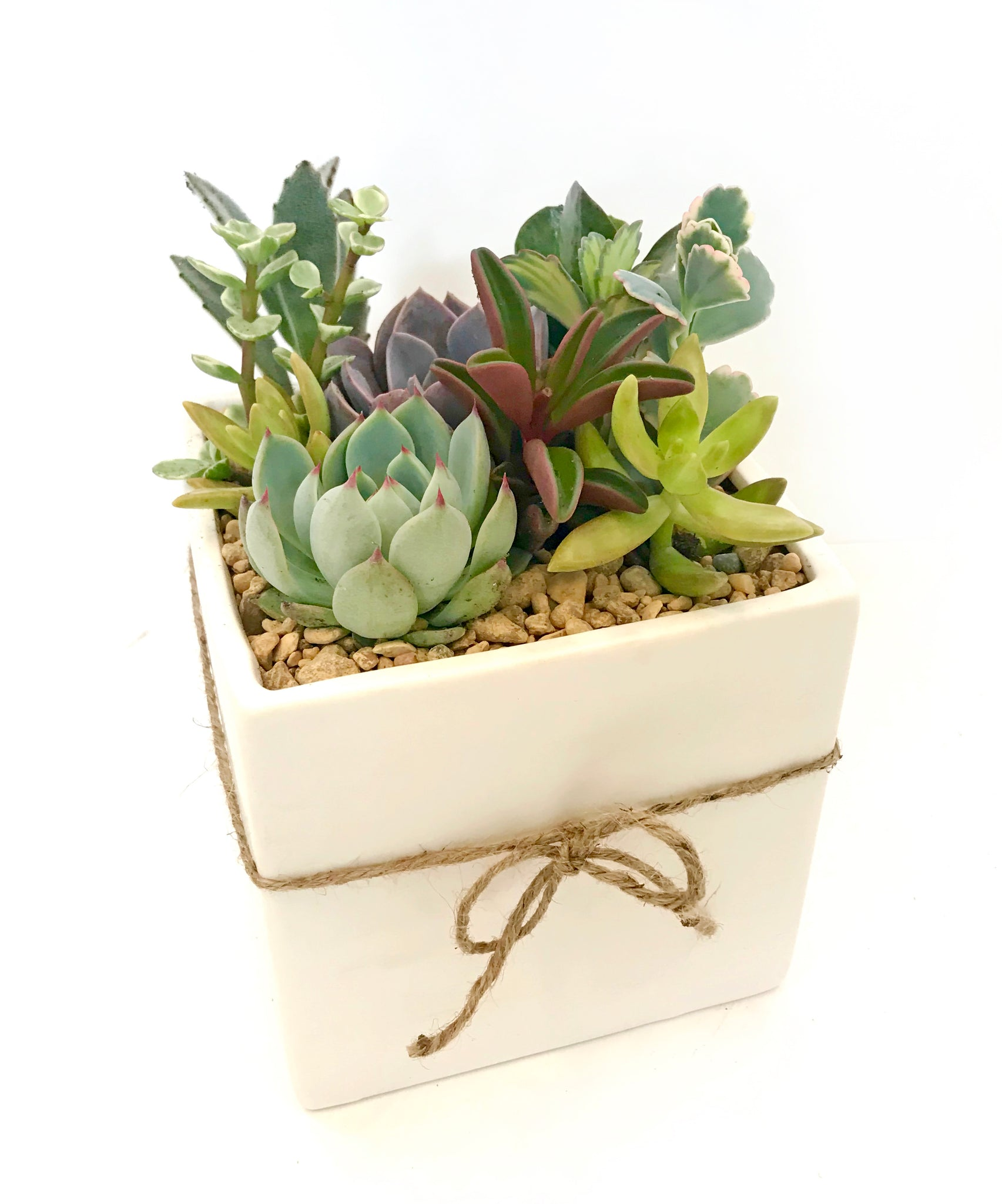 Medium Succulent Arrangement