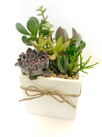 Small Succulent Arrangement