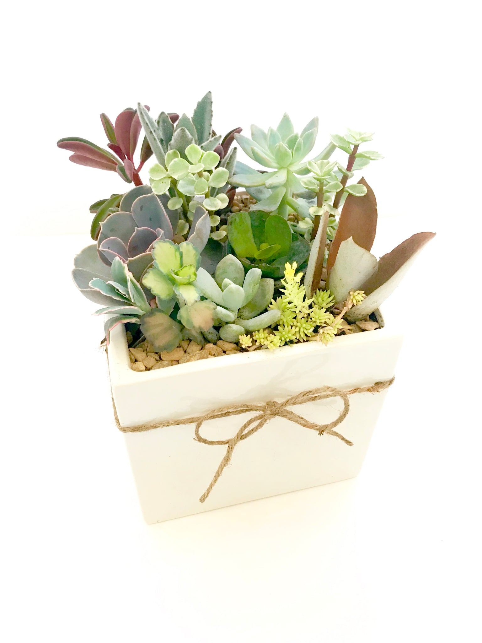 Large Succulent Arrangement