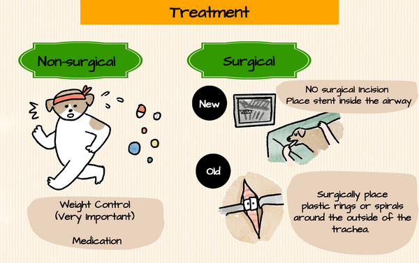 Treating Tracheal Collapse in dogs:  Medication, surgery with and without surgical incision