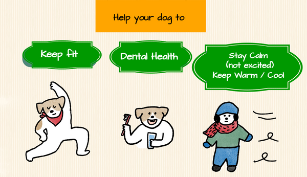 What can you do to prevent tracheal collapse in dogs?  Keep fit, dental health and keep calm