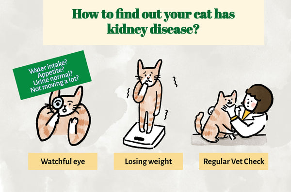 How to find out your cat has kidney disease?