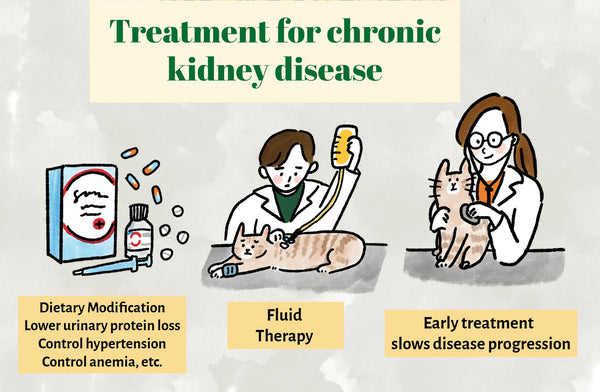 Treatment for kidney disease in cats