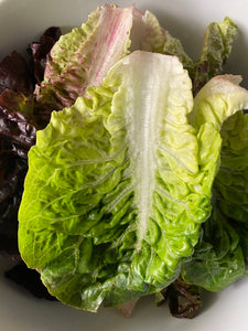 Little Gem Lettuce from Country Fresh Herbs
