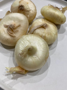 Cipollini Onions from Country Fresh Herbs
