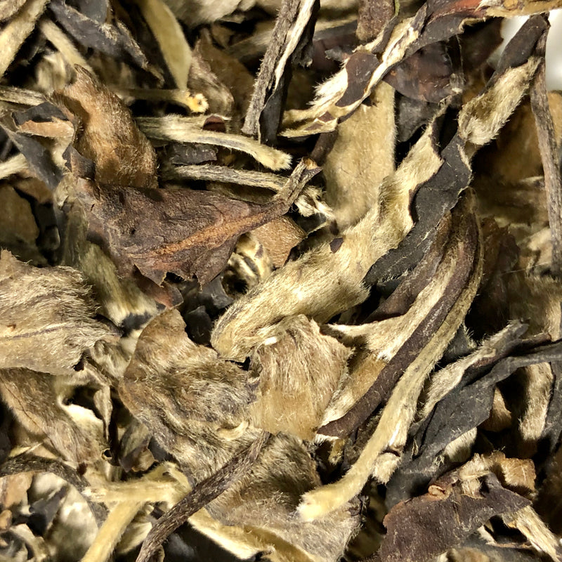 Moonlight White (Organic Raw Sheng Pu'erh)