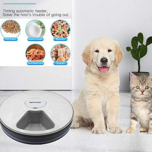 Round Timing Feeder Automatic Pet Feeder - caturdayco