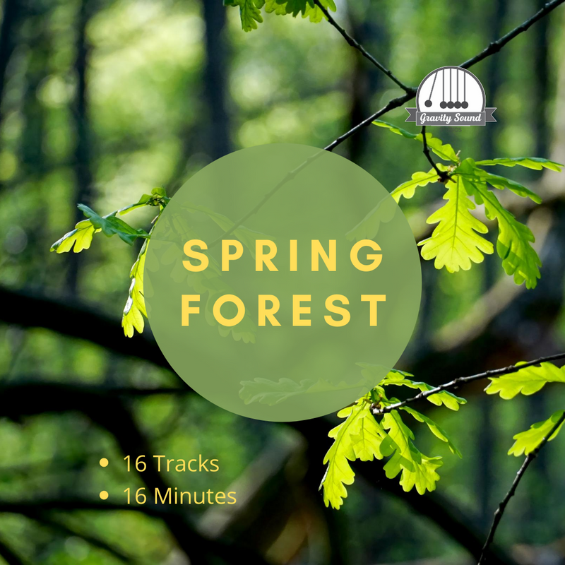 Spring Forest Sounds