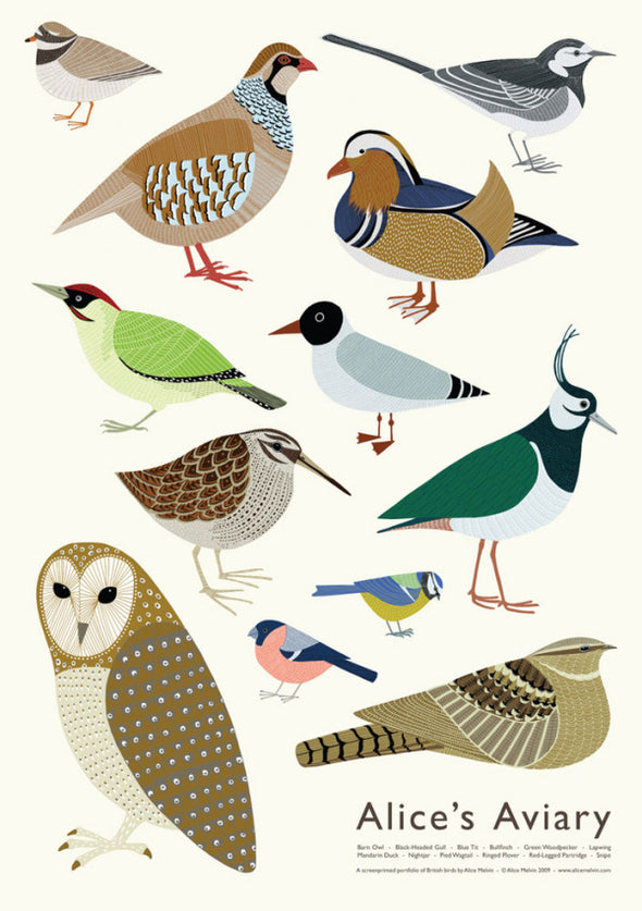 British birds poster by Alice Melvin printed in britain