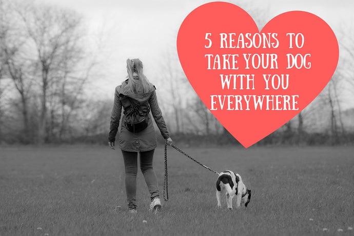 5 Reasons to Take Your Dog With You Everywhere
