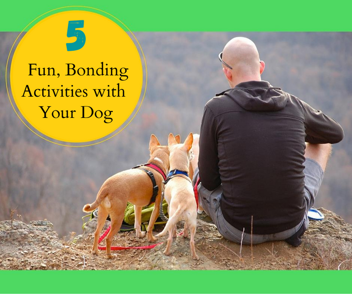 5 Fun Bonding Activities for You and Your Dog During Covid19
