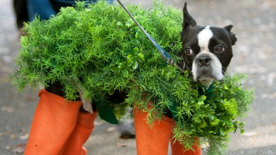5 DIY Costumes Most Pets Won't Mind (Too Much)