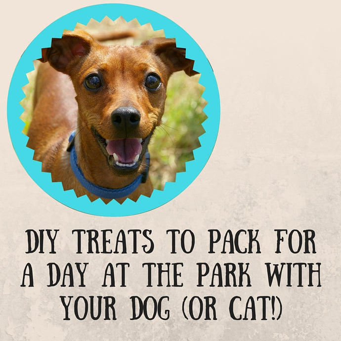 DIY Treats for a Day at the Park with Felix and Fido