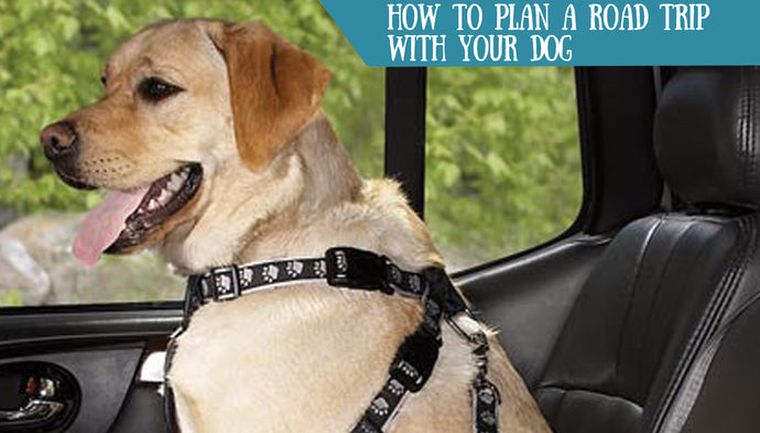 How to Plan a Road Trip with Your Dog