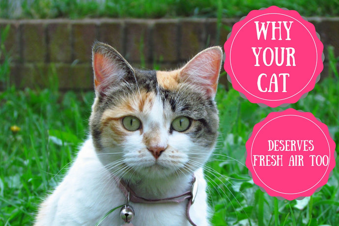 Why Your Cat Deserves Fresh Air Too