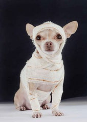 dog costume, chihuahua LeisureEase, LLC blog News worth barking about.
