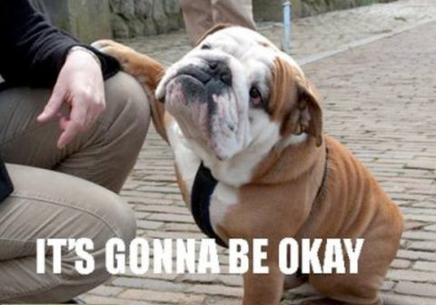 "dogs, dog companionship Meme of bulldog and man ""It's gonna be okay"""
