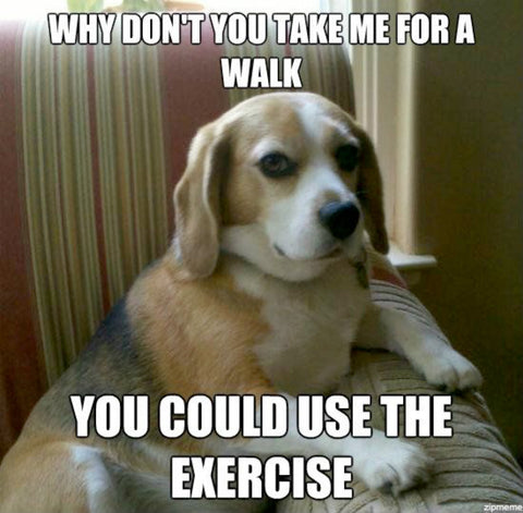 dogs, dogs and health Meme of dog lying down and asking for a walk.