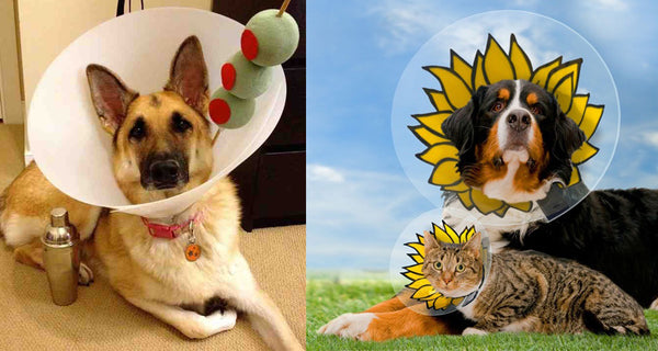 Cone of shame halloween costumes for dogs and cats.