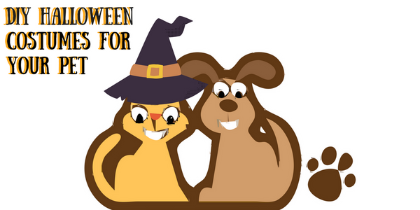 DIY Halloween costumes for pets. Witch Cat and dog