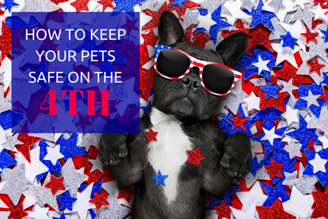 French bulldog with sunglasses on lying in red white and blue stars. Wrapsit blog.