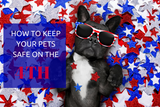 French bulldog with sunglasse on lying in red white and blue star confetti.