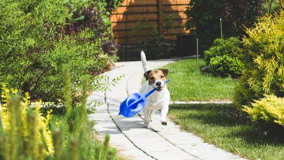 dog-in-garden-carrying-water-can