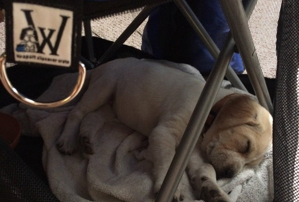 new-puppy-asleep-in-wrapsit-covered-chair-leisure-easy-blog