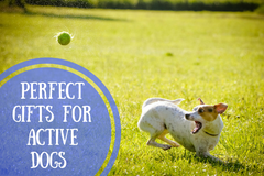dog gifts holiday Perfect gifts for active dogs