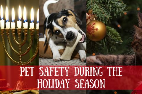 Dog pet chewing bone Pet Safety during the Holiday Season