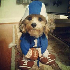 Puppy in football player costume from Petful.com